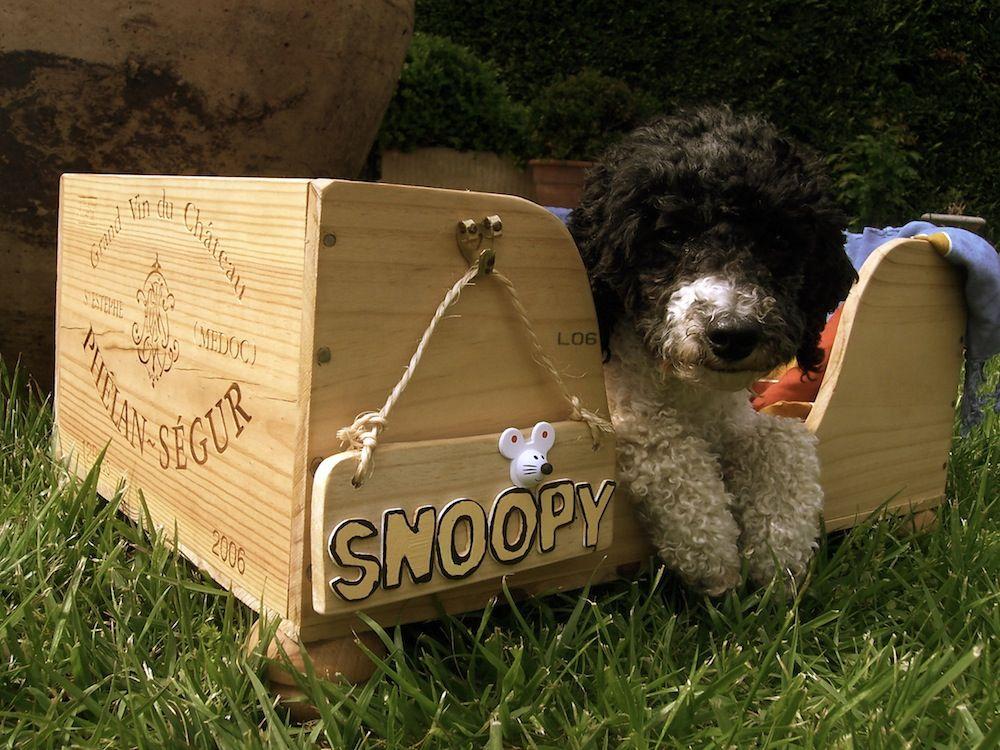 hundebett aus weinkiste selber machen f r kleine hunde hund pinterest hundebett. Black Bedroom Furniture Sets. Home Design Ideas