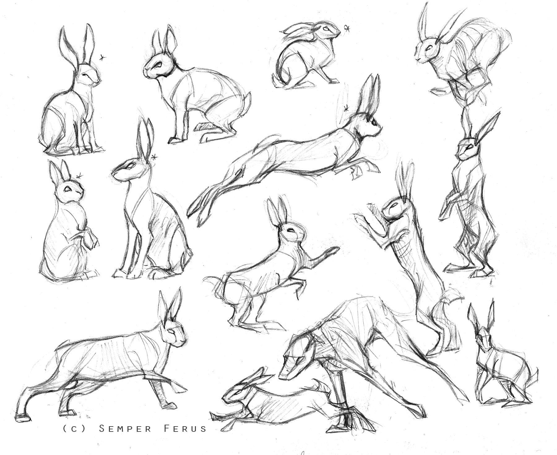 sketches hares rabbits by semperferus deviantart com on