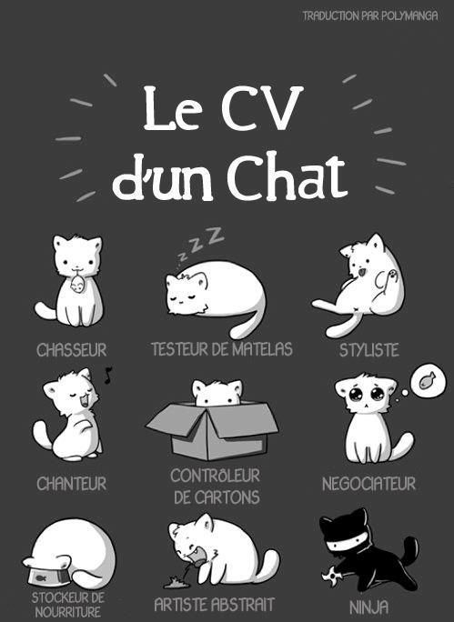 Cat\u0027s Resume of the Day Cats - illustrations Pinterest Humor