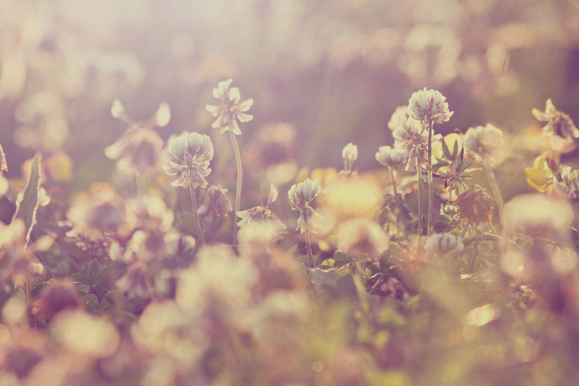 Violette Tannenbaum Wild flowers, Slide background, Tapestry