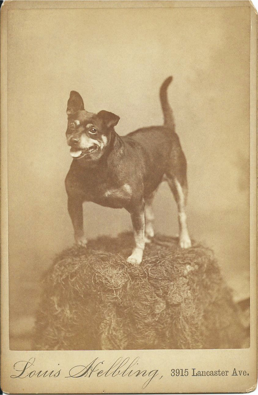 c.1890s cabinet card of a happy, black-and-tan terrier standing ...