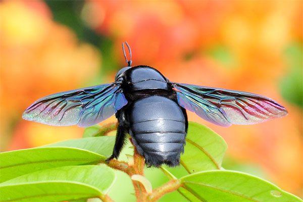 הפטריה | 50 צילומי קלוז-אפ מופלאים של חיות מיניאטוריות בטבע