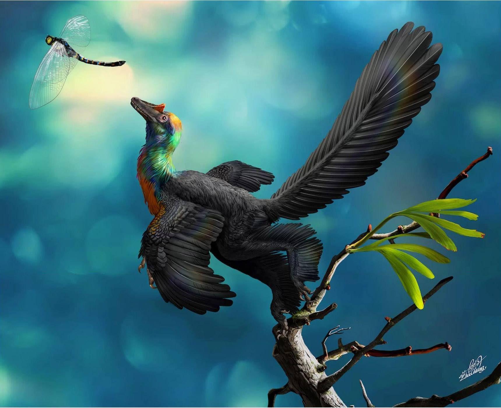 New 'Rainbow' Dinosaur May Have Sparkled Like a