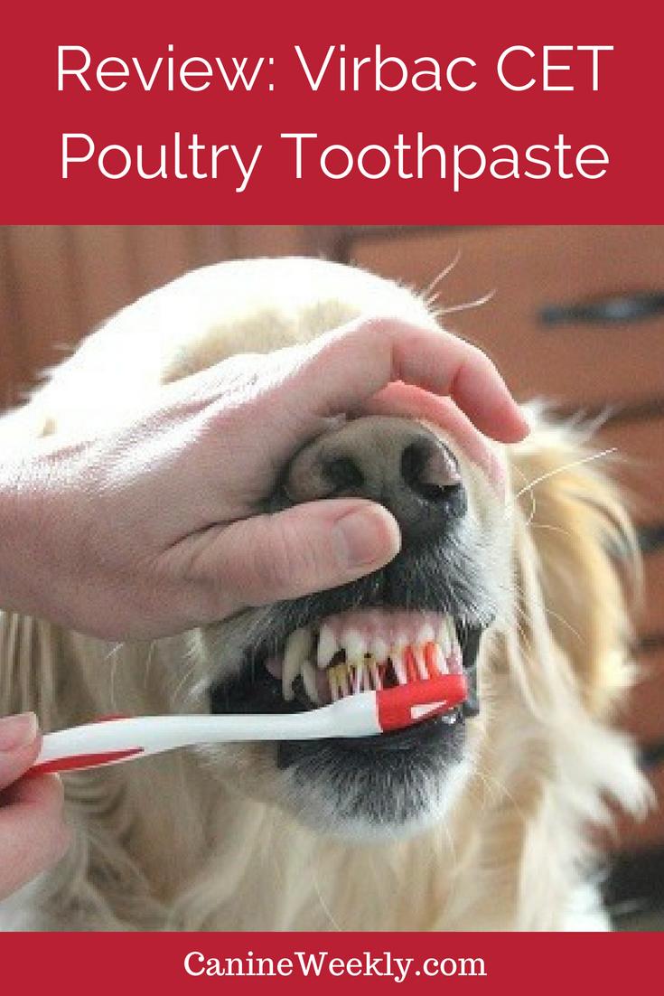 Dog Mouthing Dogs Dog Behavior Dog Training