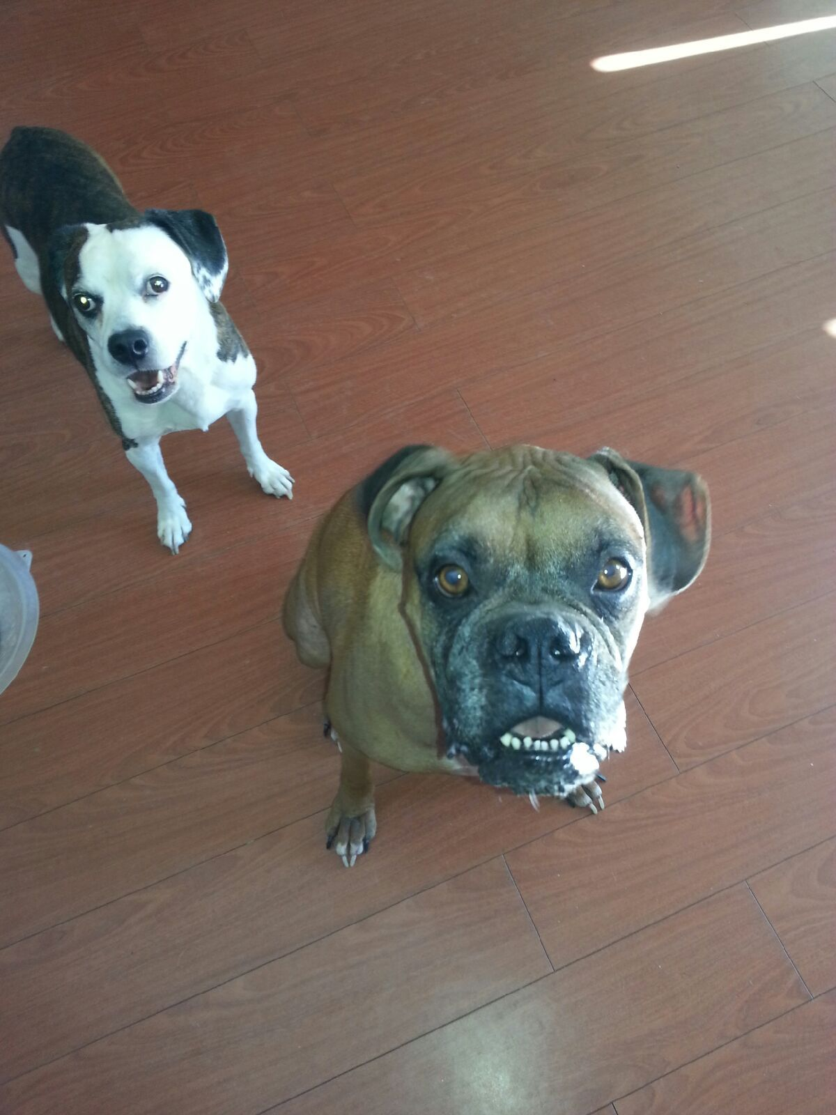 Meet Apollo and Tyson, this month's dogs of the month!