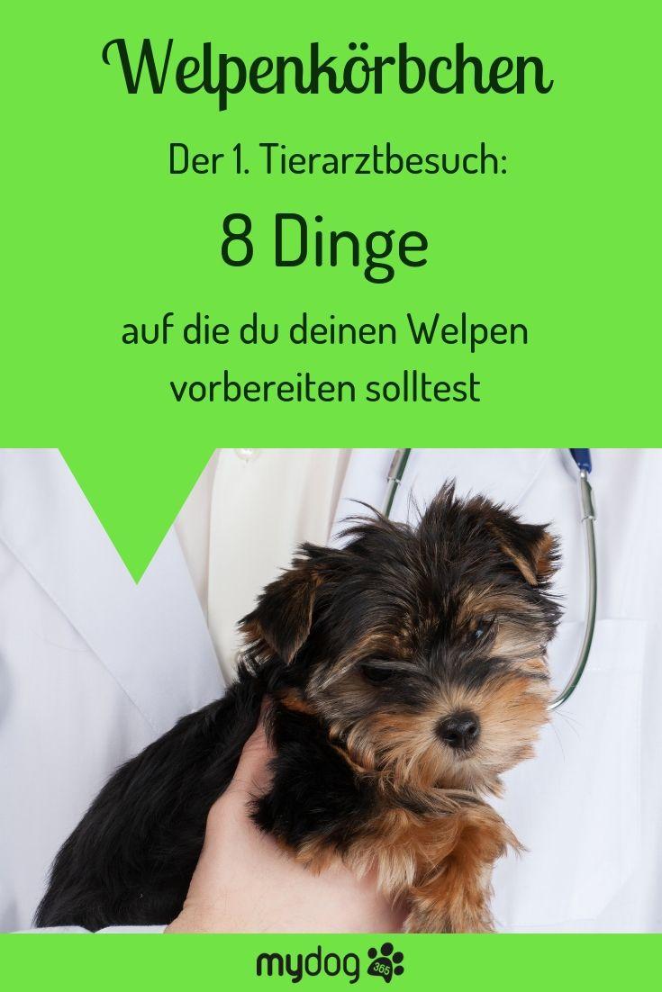 Pin Auf Hundetraining