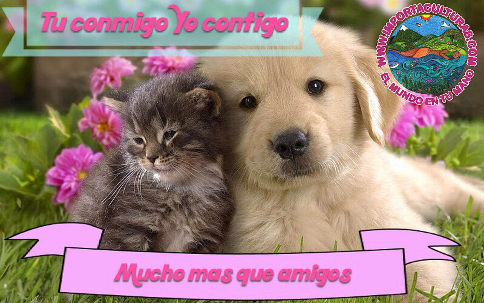 Importa abrazos!! Cute cats, dogs