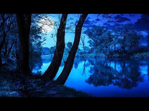 FOREST AT NIGHT ✦ Crickets Owls Rain Wind in Trees
