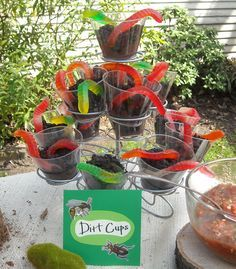 A party centered around BUGS, SNAKES and all things BOY!