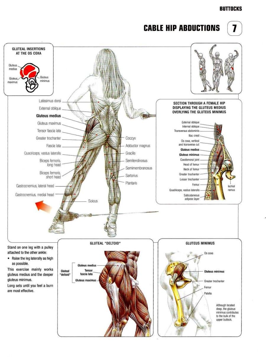 Cable-Hip-Abductions-900x1230.jpg (900×1230) | Fitness | Pinterest ...