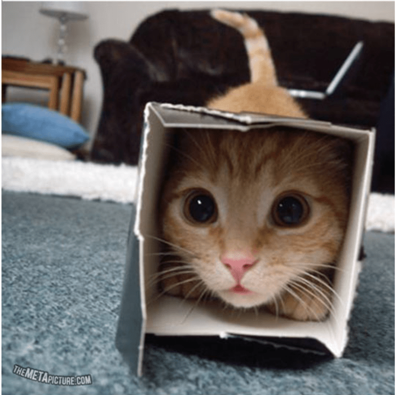 ✔ Funny Cats Memes Boxes #funnypictures #funnymeme #funnyvideo