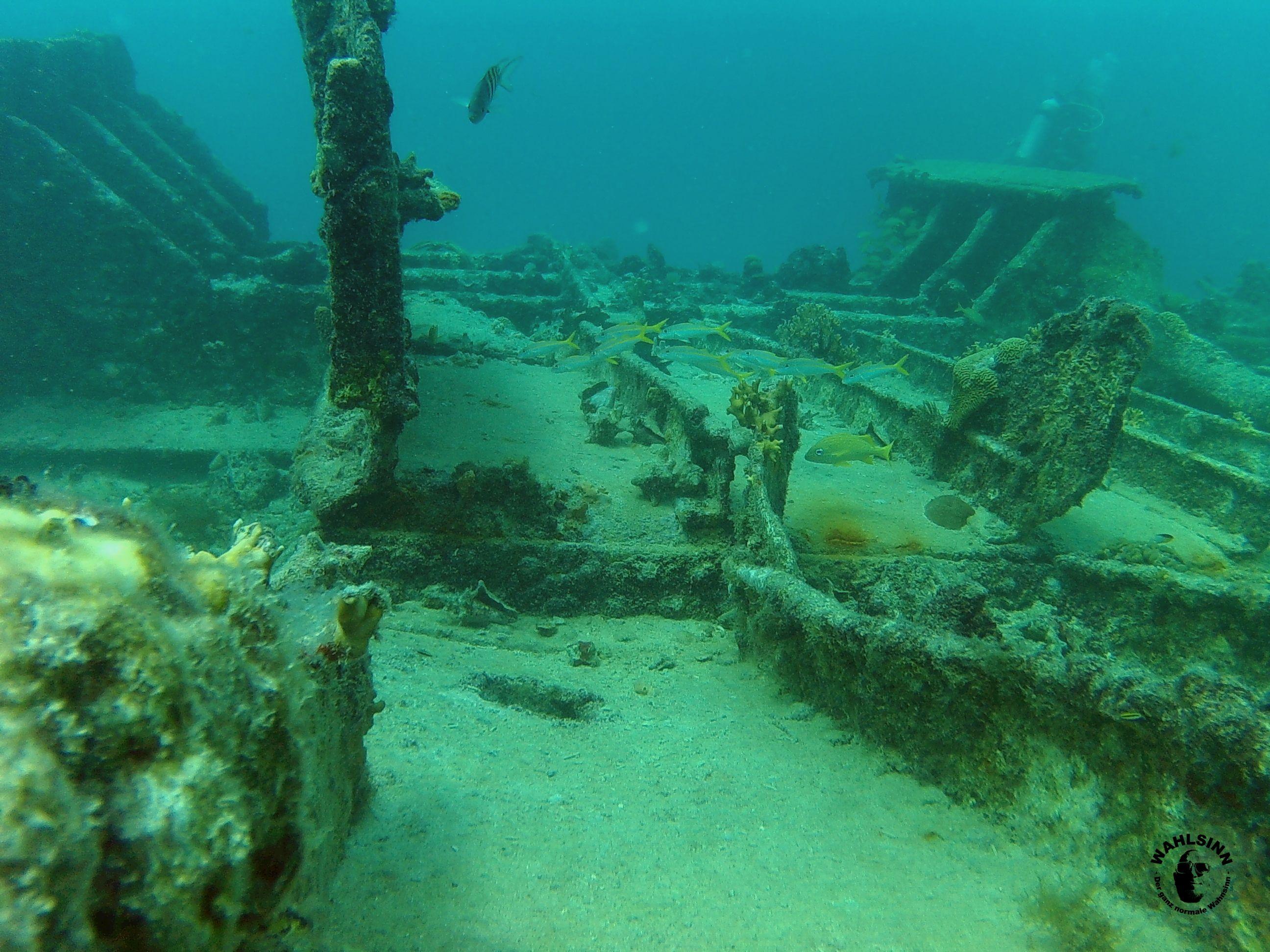 Aruba - eins der vielen Wracks die du beim Tauchen entdecken kannst. Ein Traum zum Tauchen - ohne dicken Anzug!