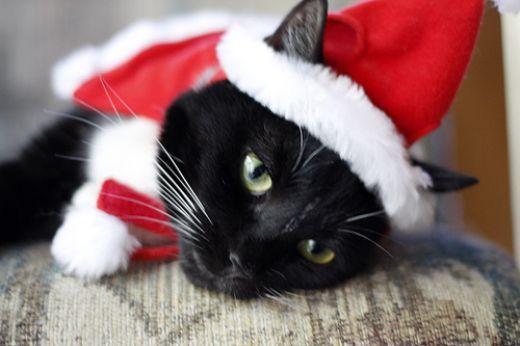 justine s halloween christmas kittychristmas