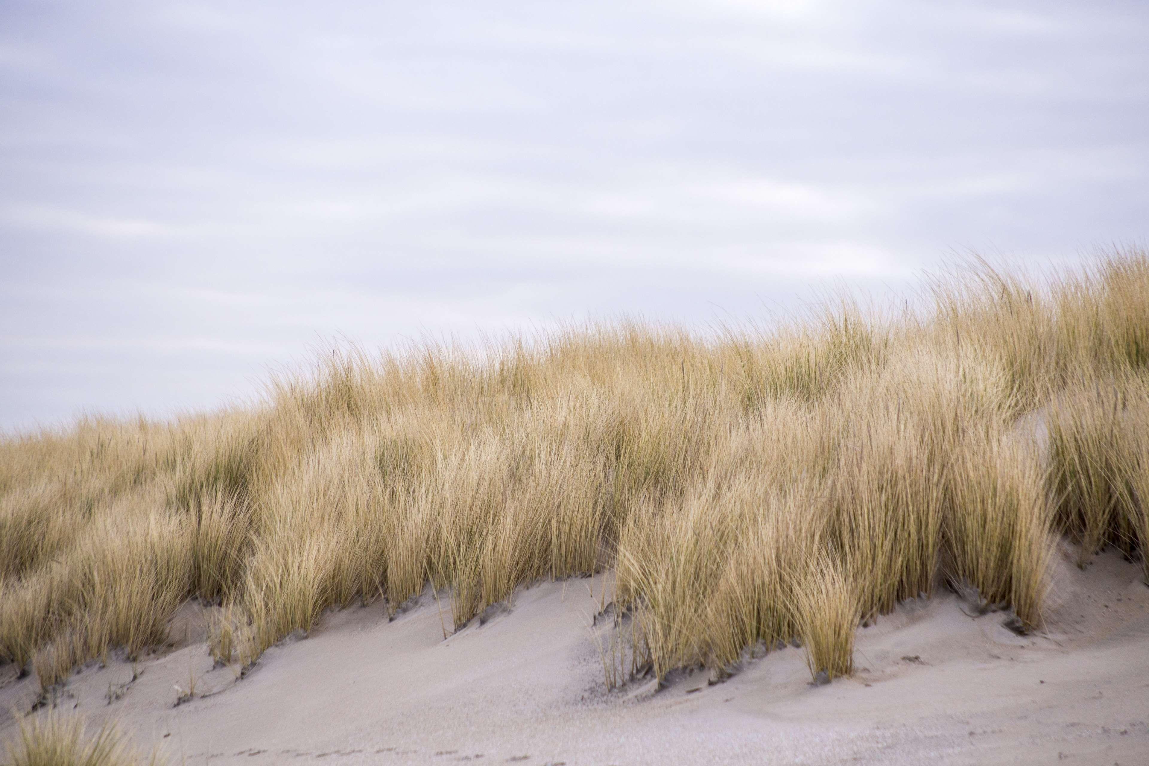 Clouds Dry Dune Dunes Environment Field Grass Landscape Marram Grass Nature Outdoors Sand Scenic Summer Travel 4k Wallpaper Landscape Fantasy Landscape Nature