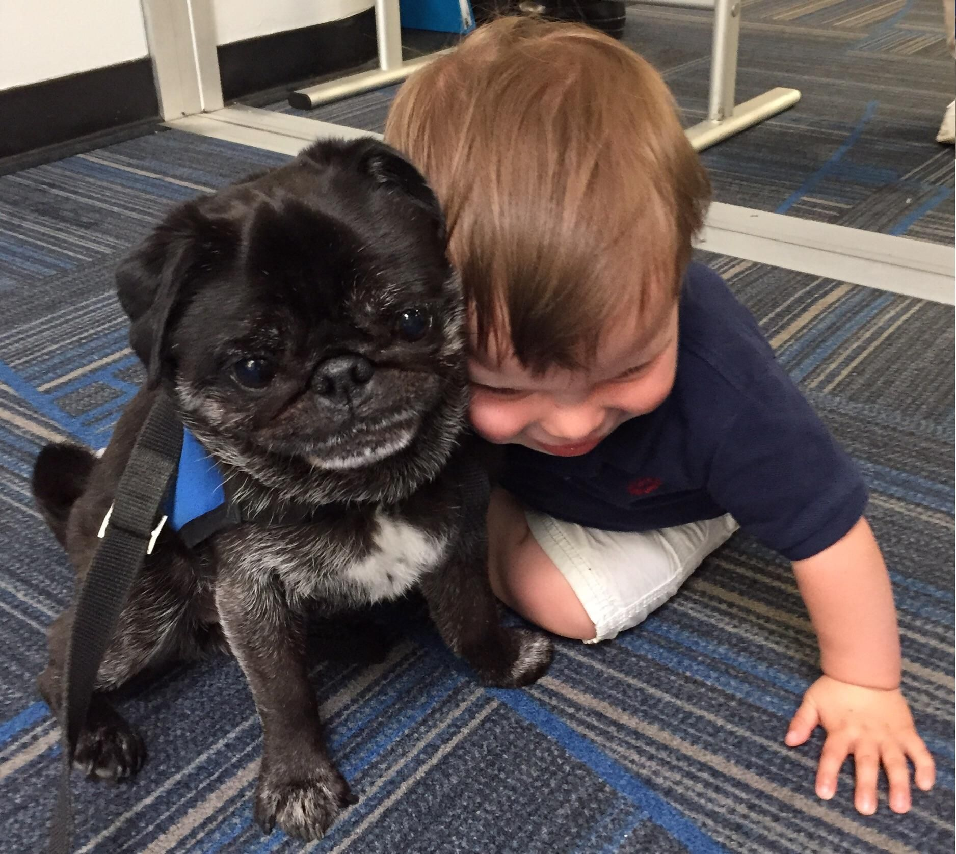 Pin By Ian Michael On All About Pugs Pugs Dogs Black Pug Puppies
