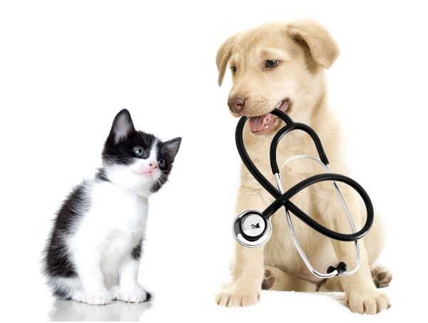 Pets For Your Good Health Best Pet Insurance Pet Insurance For