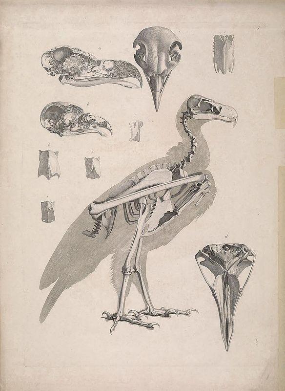 выделения анатомия птиц картинки практике тесную взаимосвязь