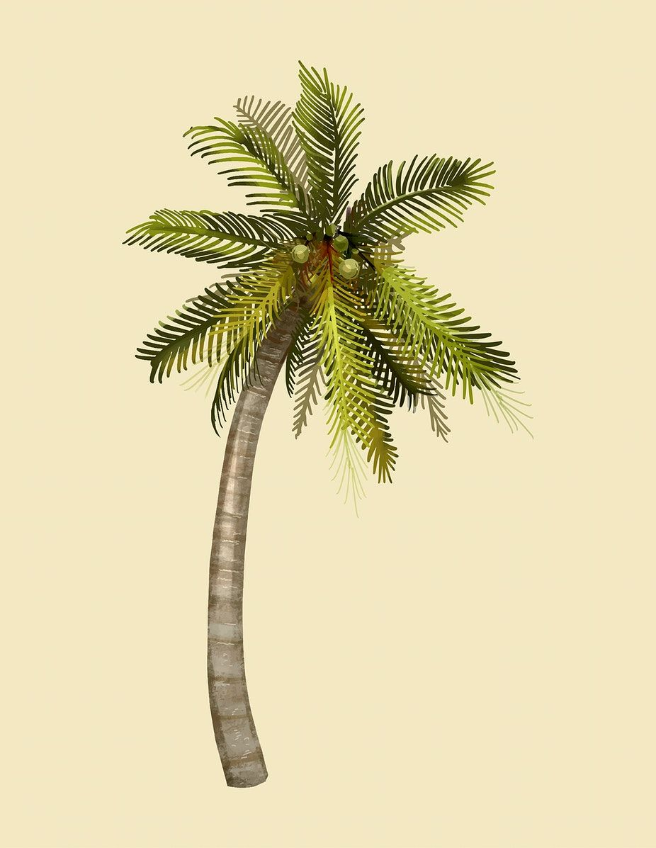 Tropical Coconut Palm Tree Illustration Free Image By Rawpixel Com Tree Illustration Palm Tree Drawing Coconut Tree Drawing