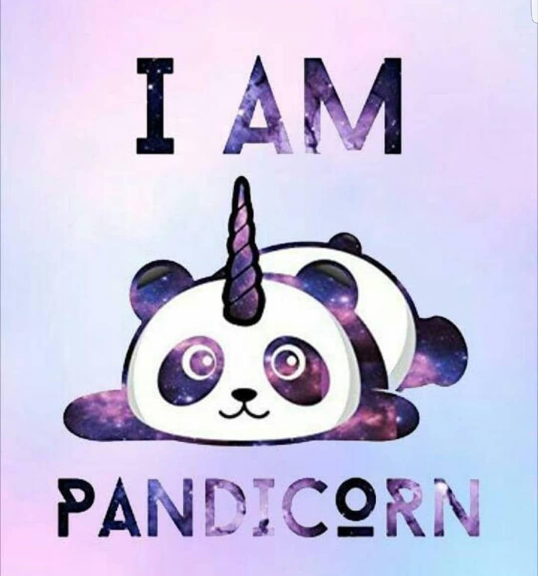 That S Me Pandacorn Panda Unicorn Fun Asyaeneva Love Cute Cutepanda Cuteunicorn Cutepic Cuti Panda Drawing Panda Wallpapers Panda Art