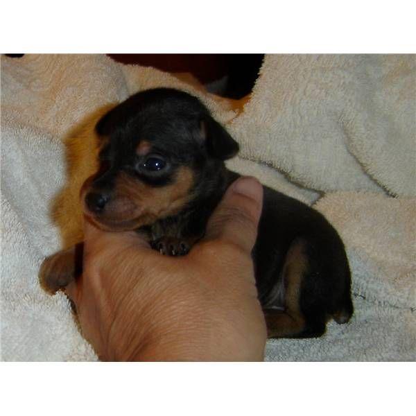 Google Image Result for http://dogsimages.nextdaypets.com/759528/f771e6cb-d8c4-46ec-a419-eaf88b4f3e67.jpg
