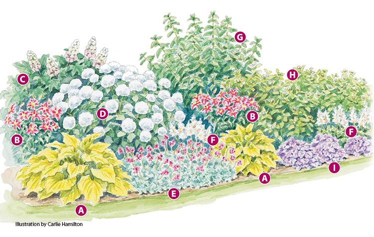 Four Season Hydrangea Border Flower Garden Plans Flower Garden Layouts Flower Bed Designs