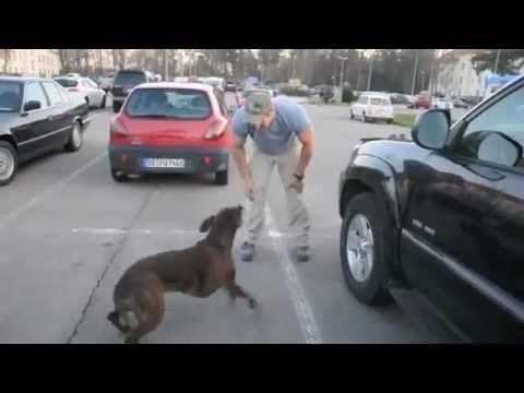 Soldado reencontra seu Cão após Meses no Exército