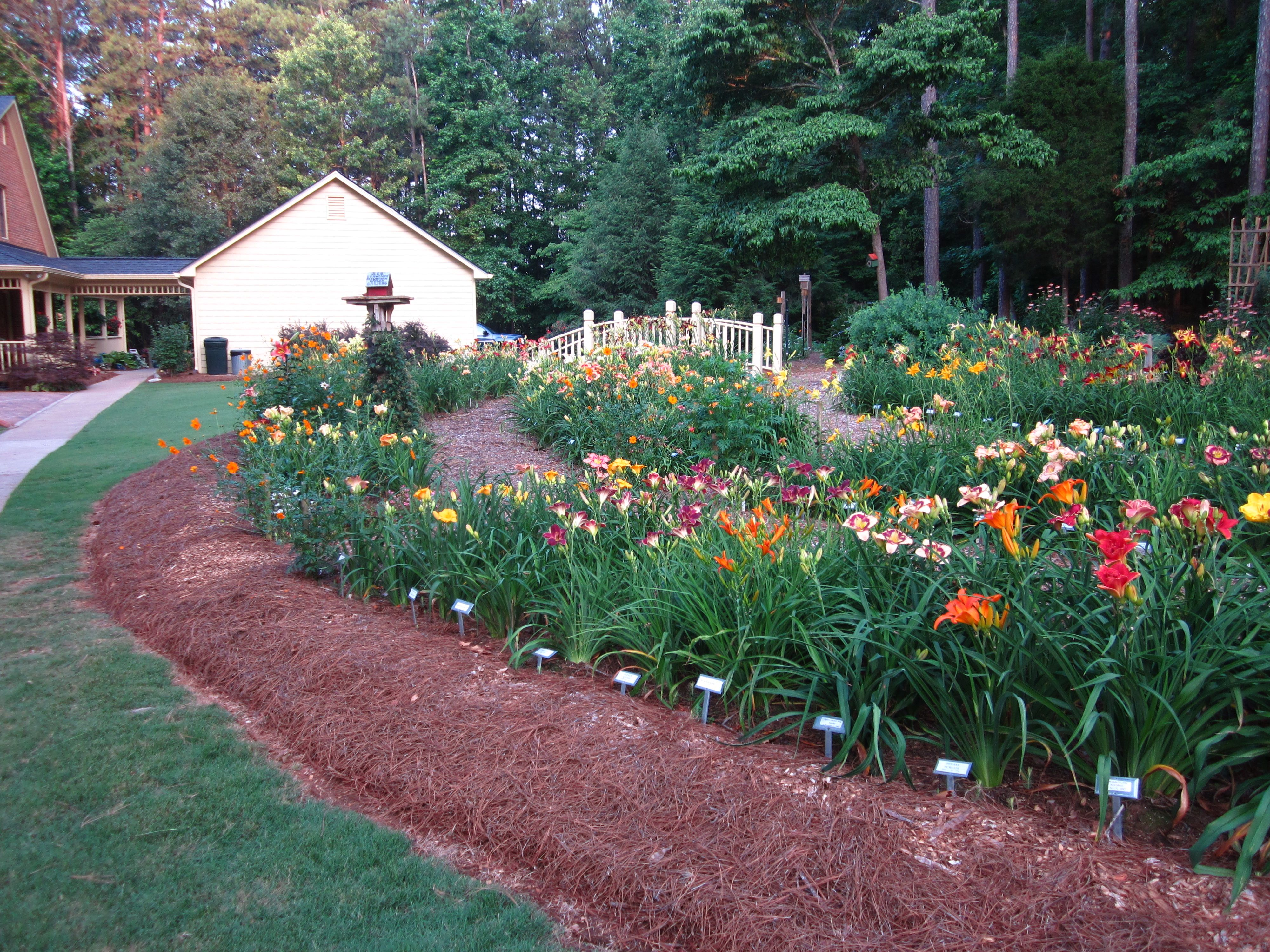 Kennesaw Mountain Daylily Gardens Daylily Garden Day Lilies Landscaping Inspiration
