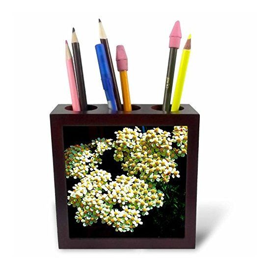 DYLAN SEIBOLD - PHOTOGRAPHY - WHITE FLOWER CLUSTER - Tile #Pen Holders #gifts  Link: