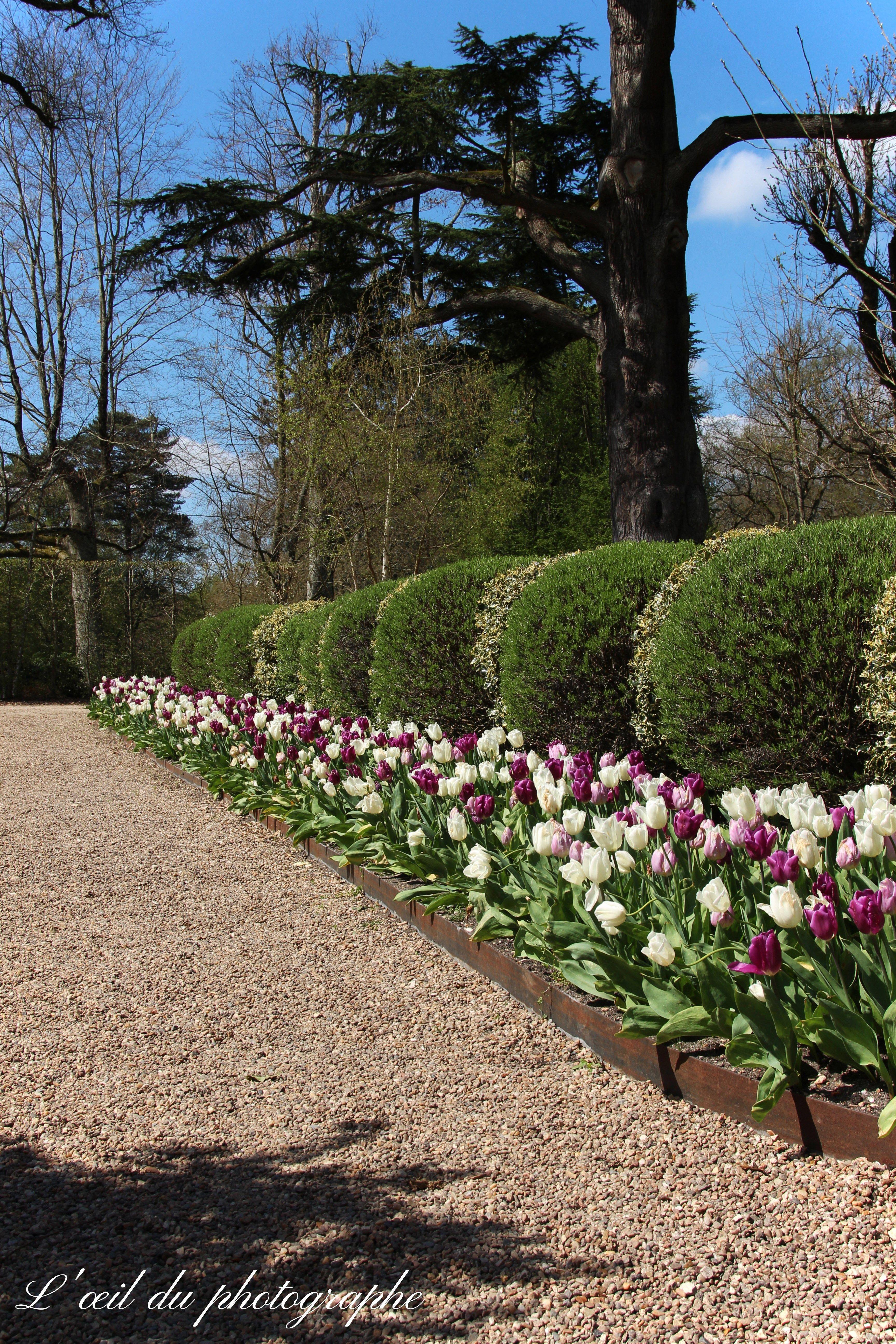 Le jardin des Tulipes environ 100 000 bulbes plantés