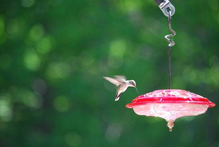 How often should i clean my hummingbird feeder bird