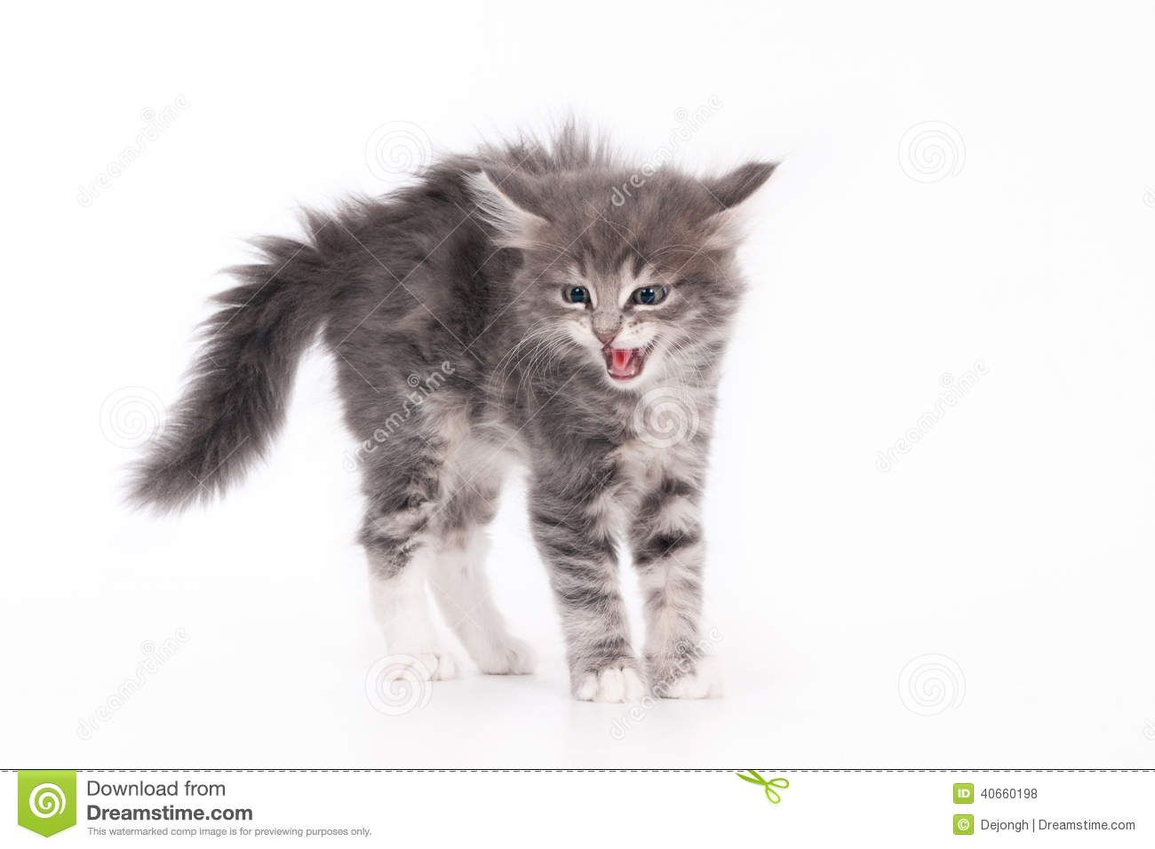 How To Draw Kittens Google Search Cats All About Cats Cat Pose
