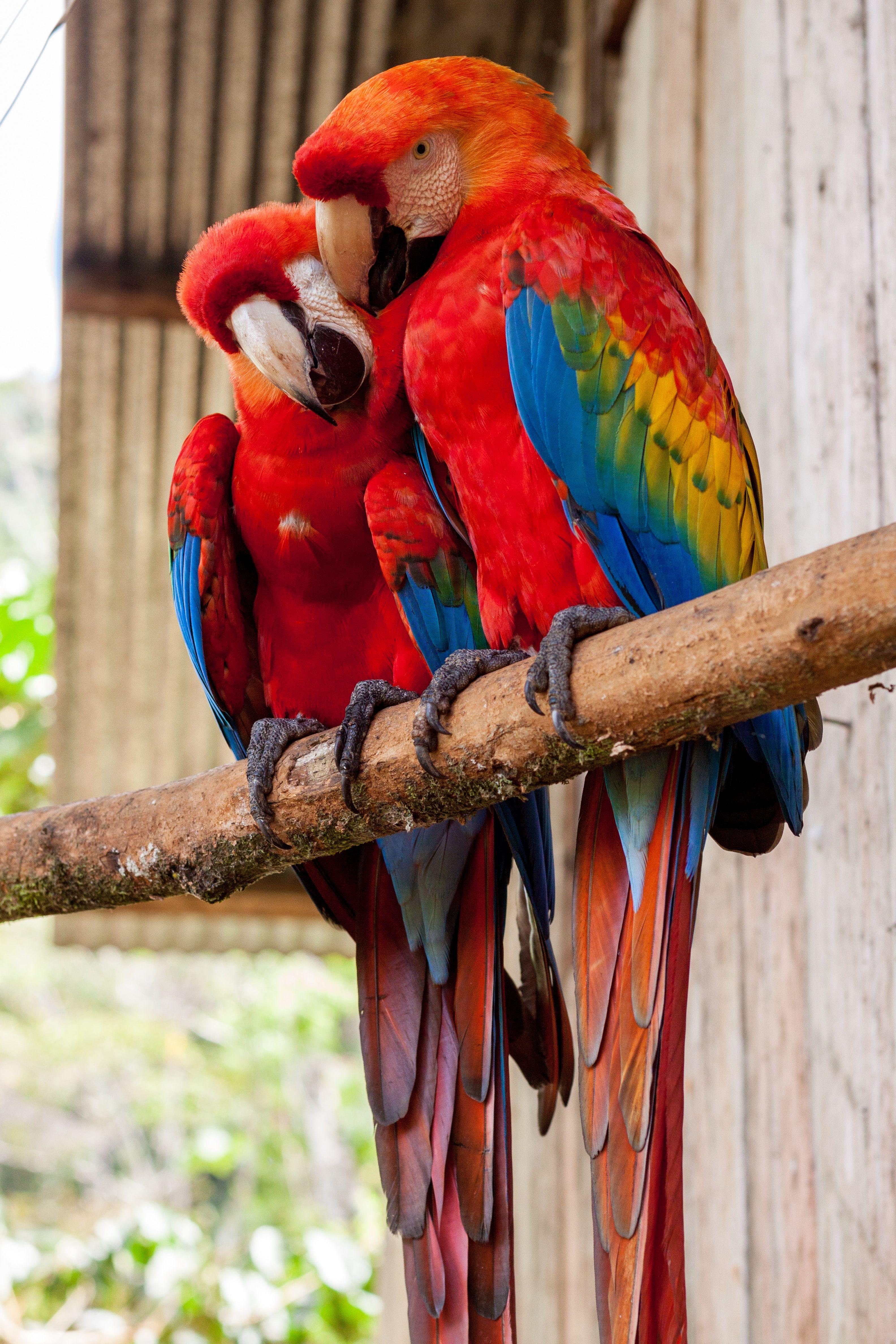 Watch beautiful parrots having lots of fun at the Cute