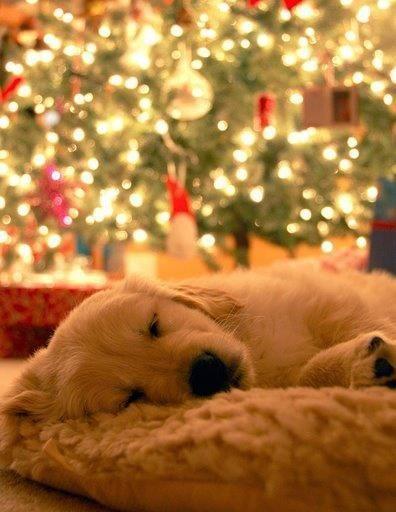 Sleep Tight Dear Puppy Puppies Retriever Puppy Dogs