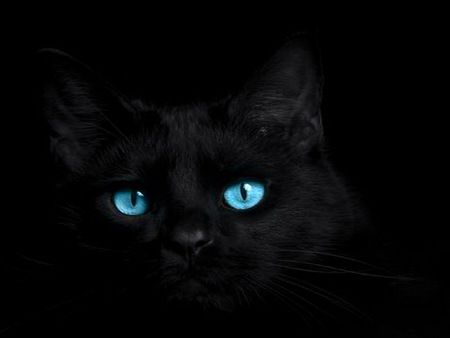 Cat Blues Black Background Black Cat Blue Eyes Gorgeous Cats Cat With Blue Eyes Black Cat