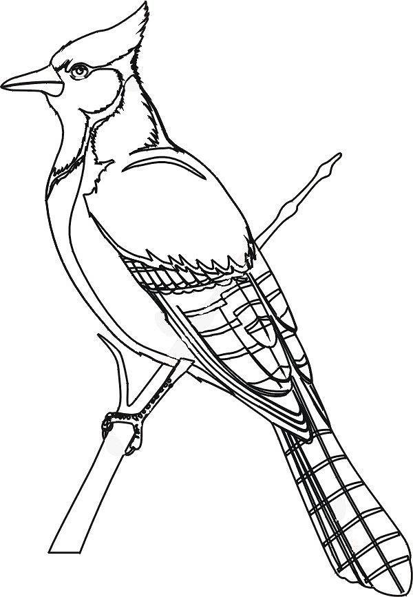 colorare/disegni_uccelli_003x.jpg | School-Birds | Pinterest | Lápiz ...
