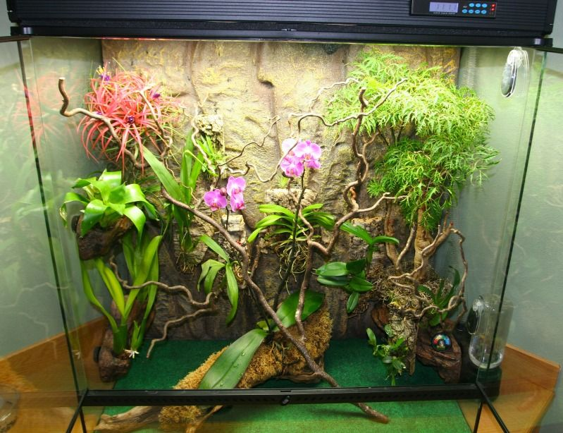 Reasons why real chams need real plants! - Chameleon ...
