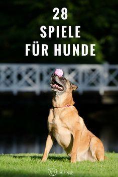 Spiele für Hunde