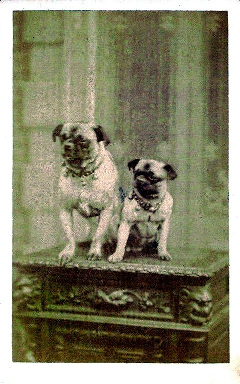 Mother Pug And Her Puppy Circa 1890 Pugs Vintage Dog