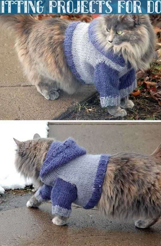Free Knitting Pattern For Cat Hoodie Cat Sweater With
