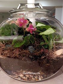 How To Create A Sealed Orchid Terrarium Things I Will Do Orchid