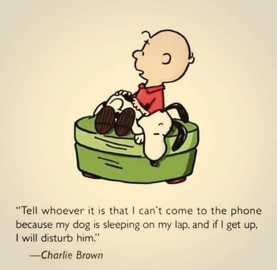 Our excuse when we don't want to answer the phone. Bonnie's sitting on our lap, ha ha! :)