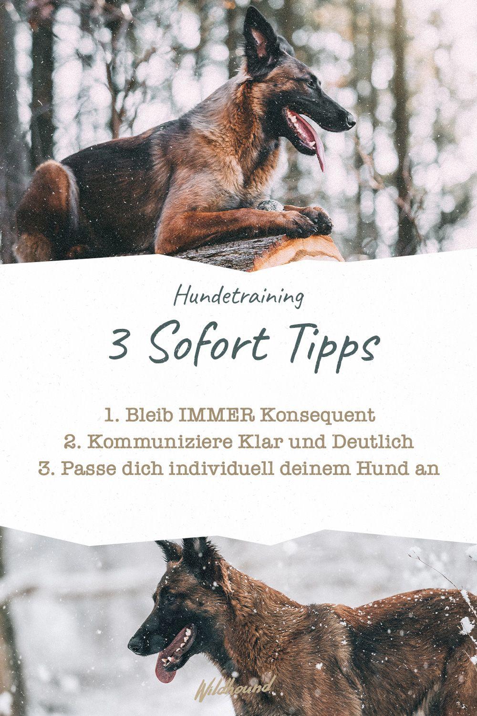 3 Sofort Tipps Die Du In Dein Hundetraining Einbeziehen Kannst In