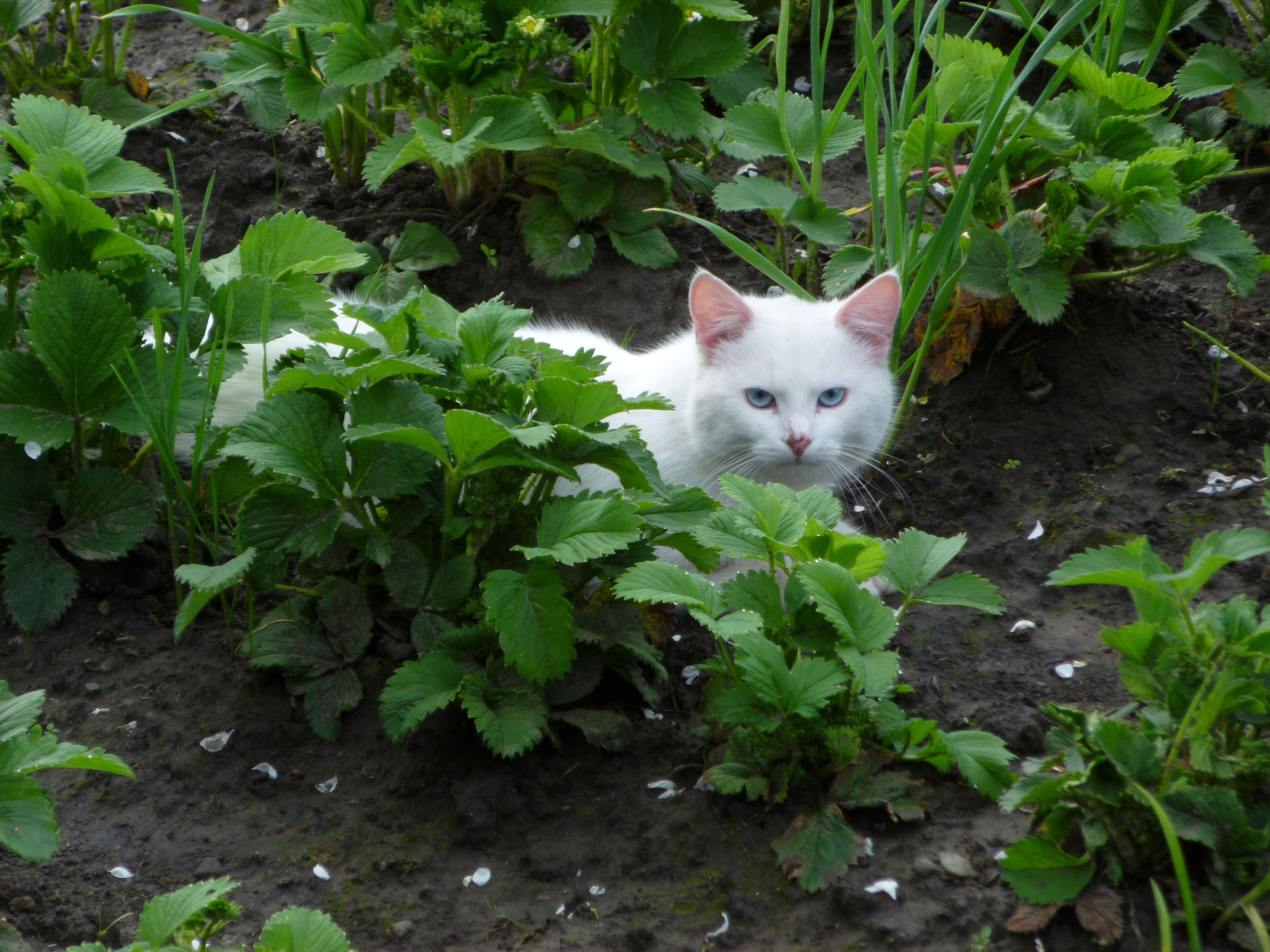 White cat in my grandmas garden