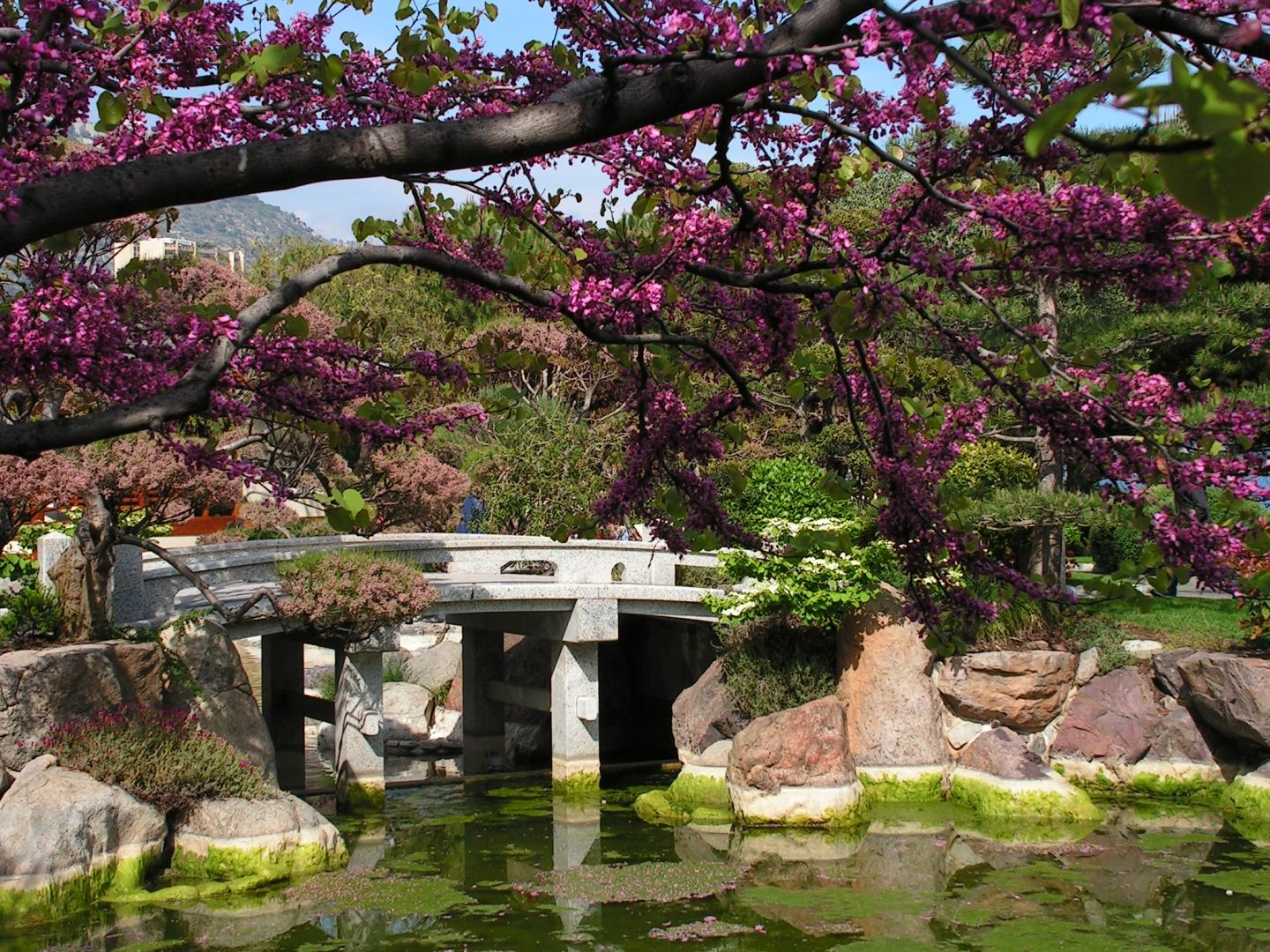 japanese gardens are one of the most beautiful gardens in the world - Japanese Garden Cherry Blossom Bridge