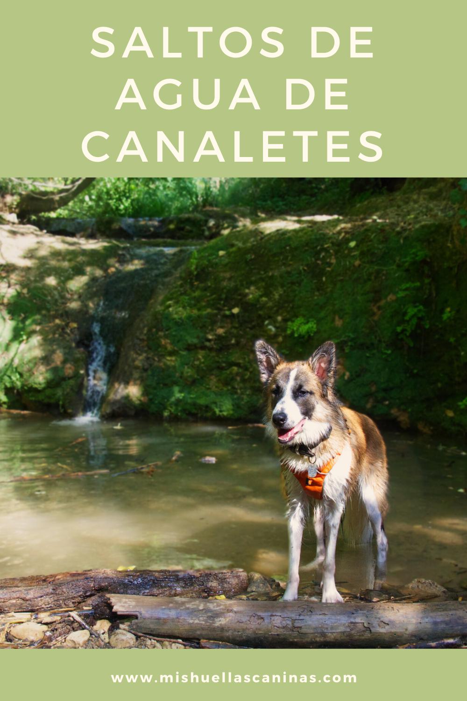 Saltos De Agua De Canaletes Con Perro Saltos De Agua Saltos Agua