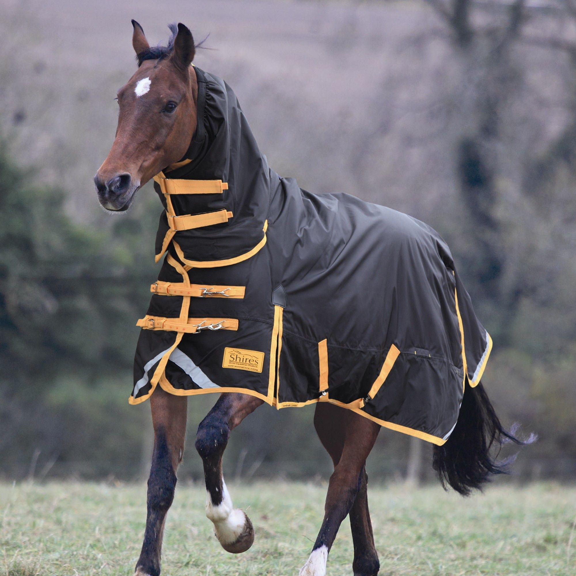 Finding the best horse rug is sometimes difficult, but at