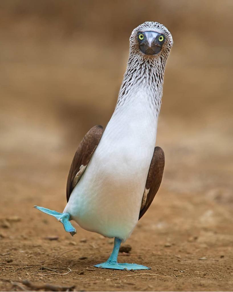 مجلة ناشيونال جيوغرافيك العربية on Twitter | Animals, Funny birds, Cute  animals