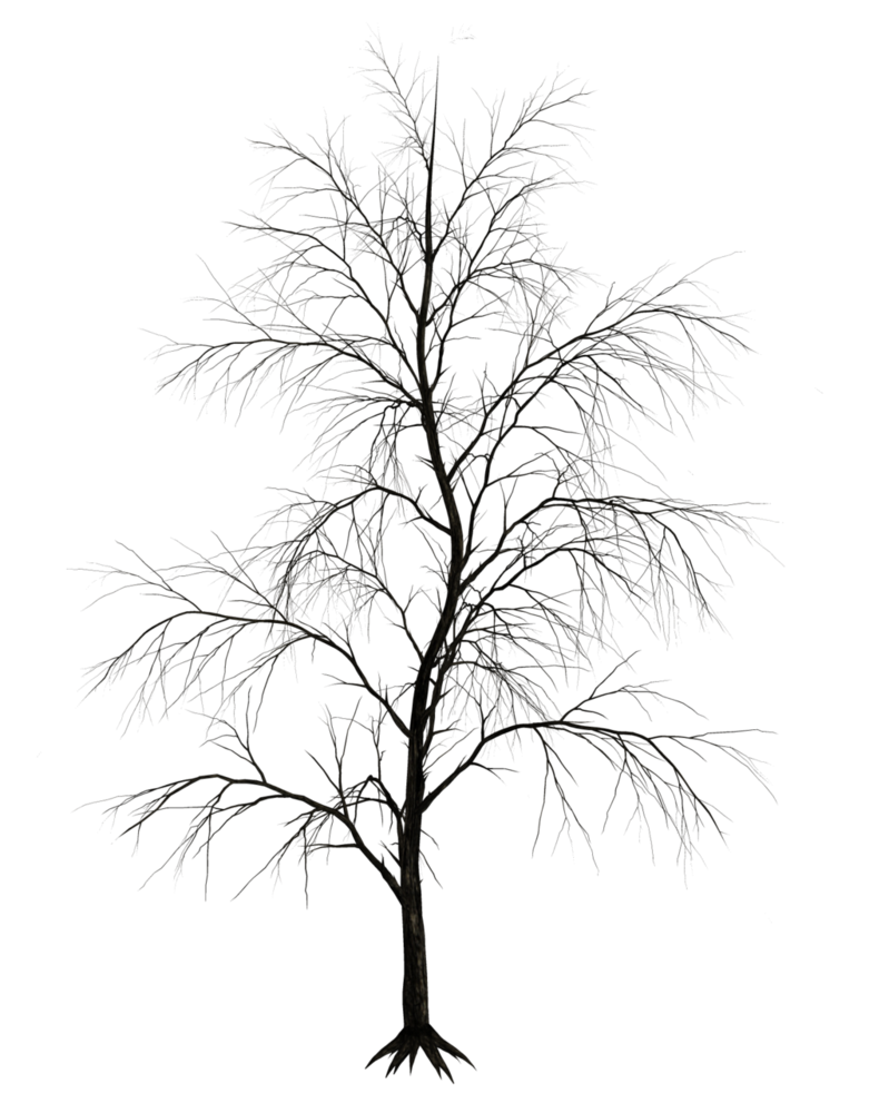 Dark Trees Png Stock 09 Tree Drawing Dark Tree Photoshop Landscape