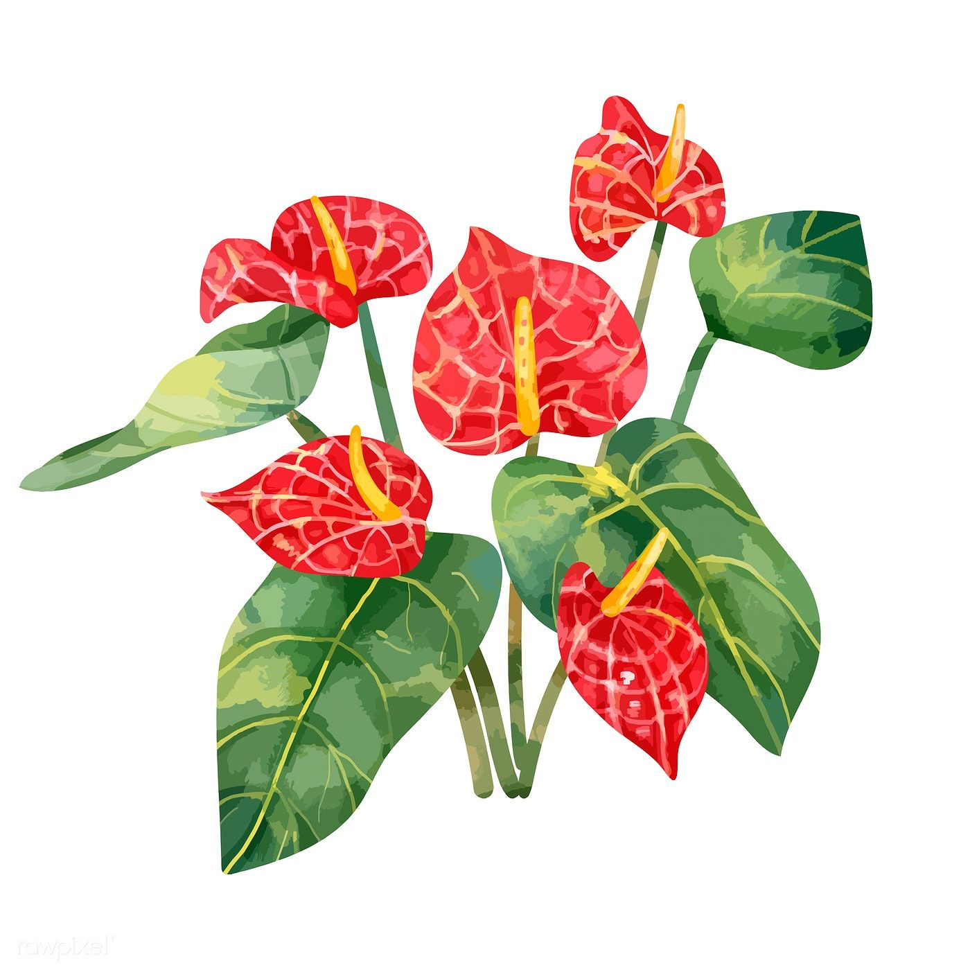 Download Premium Vector Of Hand Drawn Red Laceleaf Flower 421530 Flower Illustration Botanical Drawings How To Draw Hands