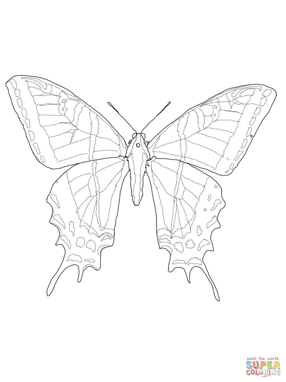 Swallowtail Butterfly Coloring Page Youngandtae Com Butterfly Coloring Page Insect Coloring Pages Coloring Pages [ 1600 x 1200 Pixel ]